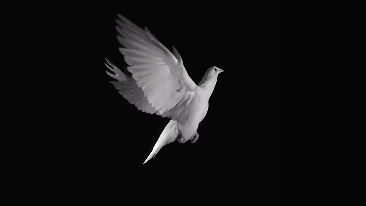 THE DOVE ( Screensaver )
